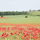 Midsummer Poppies by Sarah Jane Bingham