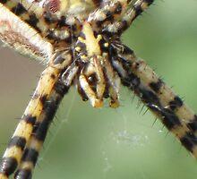 Grinning Arachnid...GAK by trueblvr