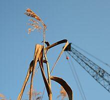 As Tall As A Crane by yellowfintuna