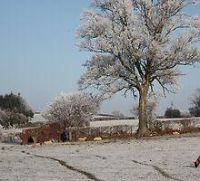 Farm in the Frost by missmoneypenny