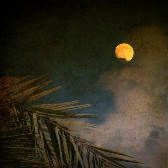 Florida Moon by Susanne Van Hulst