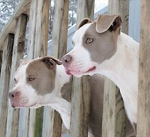 Double Trouble by Ginny York