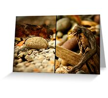 Things found on a rocky shore 2  Greeting Card