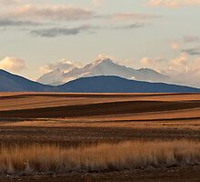 Wheat Fields and Longs Peak by Gregory J Summers