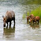 A Mother Moose and Her Two Calves by vtmichael