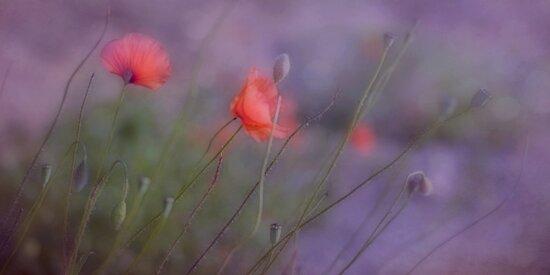 Serenade by Priska Wettstein