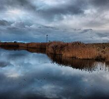 The Reed Beds . by Lilian Marshall