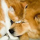 """""""Comforting Companions"""" cat and dog snuggling by John Hartung"""
