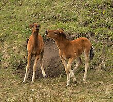 foal fight by JamesA1