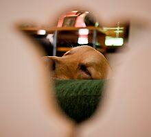 Through the Looking Glass by kraMPhotografie