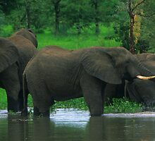 Elephant Shower by naturalnomad