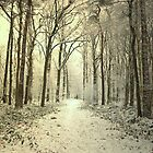 Winter Forest by ienemien