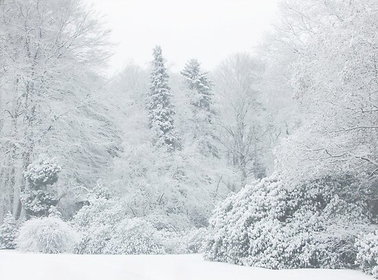 All is white... by Yool