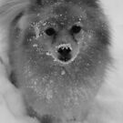snow grace B&W by Evette Lisle