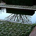 winter garden by Kent Tisher