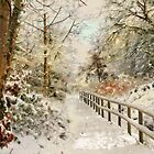 Winter delight by Lyn Evans