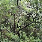 Sculpture in the Bush by aussiebushstick