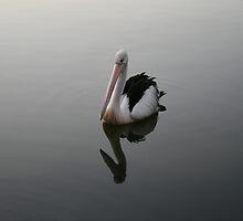 Pelican Peace in Tuncurry by aussiebushstick