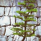 Pine Tree by Janette Zlamal