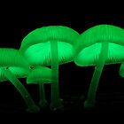 Mycena chlorophanos - Dec 2010 by Steve Axford