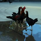 A puddle of hens waiting for the pounce by Jenny Wood