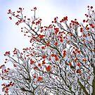 Berries by Lisa Williams