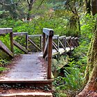 Redwood forest trail bridge by David Owens