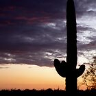 Cactus in Arizona at sunset by Joe Bashour