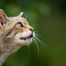 On the Wild Side by Peter Denness