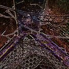 Web by Graham Southall