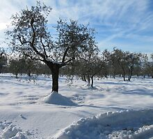 snow in country side(Tuscany/italy) by bertipictures