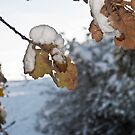Early Winter by Chris Vincent