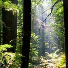 Dramatic Forest by Diane Schuster