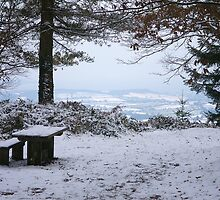 Walking in Winter Wonderland - Haldon Forest, Devon. by rboys