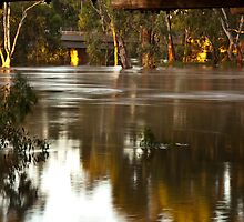 Murrumbidgee in Flood by Andrew Harris