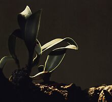 Orchid in Tree by linaji