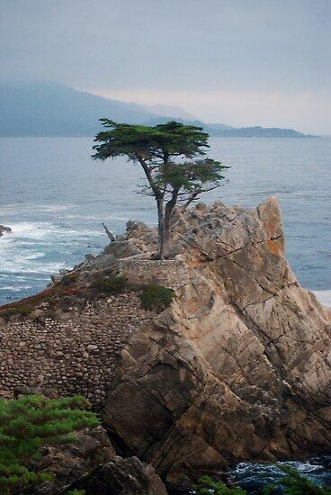 Lone Cypress by MaryLynn