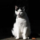 Black and White Cat Sitting by Jean Gregory  Evans