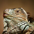 Iguana by Scott Carr