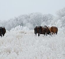 Horses in Montana winter by Donna Ridgway