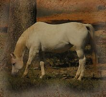Little White Miss Grazing by Stephanie Reynolds
