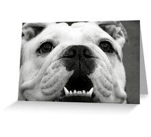 Butch the Bulldog Greeting Card
