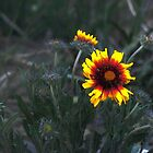 Mountain Flower by DZINE