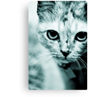 Meow....where are you mommy? : On Featured Work Canvas Print