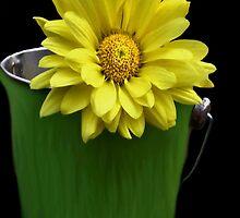 Sunshine in a Pail by Carla Jensen