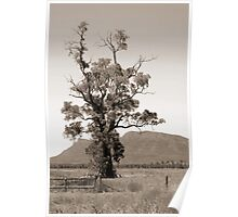 The Cazneaux Tree Poster