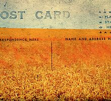 Postcards from far away: Those Fields of Gold by Friederike Alexander