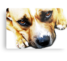 Bull Terrier Eyes Metal Print