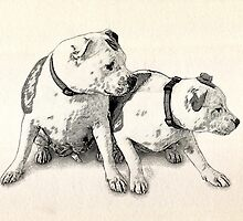Two Bull Terriers by ArtPrints