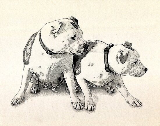 Two Bull Terriers by Michael Tompsett